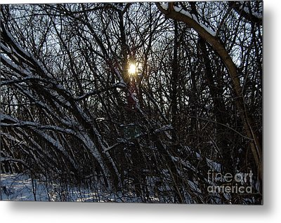 Yearning For Spring By Jammer Metal Print by First Star Art