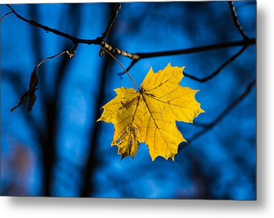 Yellow Blues - Featured 3 Metal Print by Alexander Senin