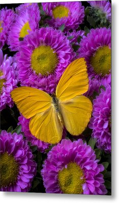 Yellow Butterfly And Pink Flowers Metal Print by Garry Gay