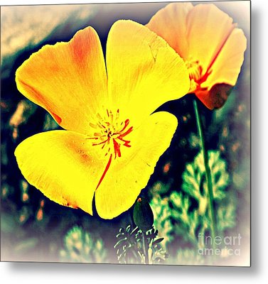 Yellow California Poppies Metal Print by Michaline  Bak