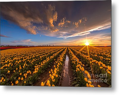 Yellow Fields And Sunset Skies Metal Print by Mike Reid