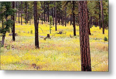 Yellow Forest Metal Print by Kume Bryant