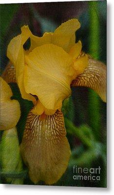 Yellow Iris Textured Metal Print by Amanda Collins