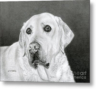 Yellow Labrador Retriever- Bentley Metal Print by Sarah Batalka