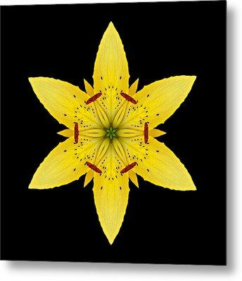 Yellow Lily I Flower Mandala Metal Print by David J Bookbinder