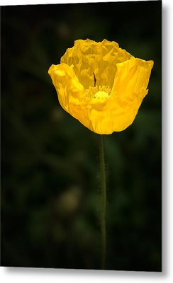 Yellow Poppy Metal Print by  Onyonet  Photo Studios