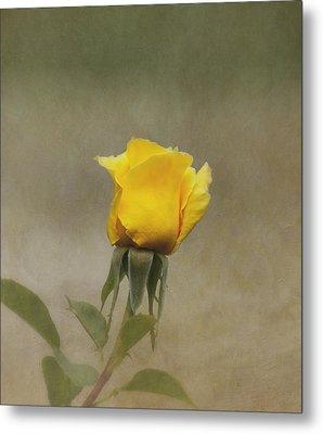 Yellow Rose Metal Print by Kim Hojnacki