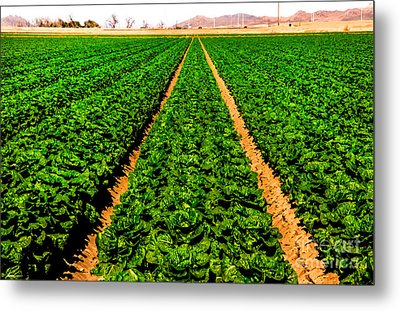 Young Lettuce Metal Print by Robert Bales