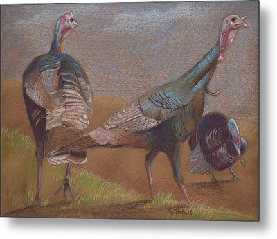 Young Toms Metal Print by Pam Little