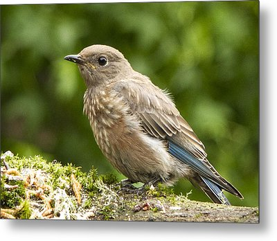 Youngster Metal Print by Jean Noren