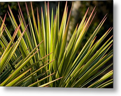 Yucca 1 Metal Print by Frank Tozier