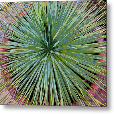 Yucca 2 Metal Print by Frank Tozier