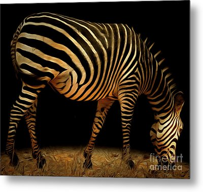 Zebra 20150210brun Metal Print by Wingsdomain Art and Photography