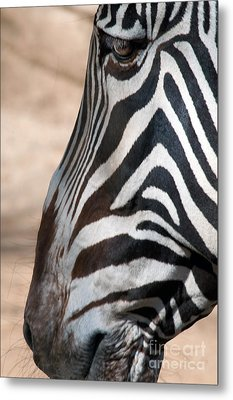 Zebra Profile Metal Print by Dan Holm
