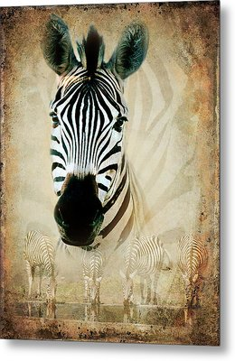 Zebra Profile Metal Print by Ronel Broderick
