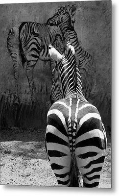 Zebra Metal Print by Veronika Limonov