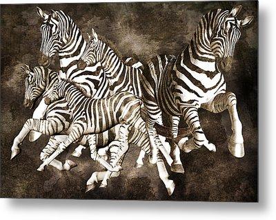 Zebras Metal Print by Betsy C Knapp