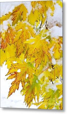 Autumn Snow Portrait Metal Print by James BO  Insogna