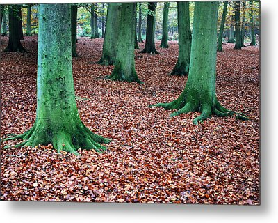 Day Of The Tree Feet.  Metal Print by Terence Davis