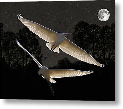 Majestic Great Egrets  Metal Print by Eric Kempson