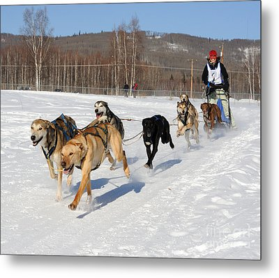 2010 Limited North American Sled Dog Race Metal Print by Gary Whitton