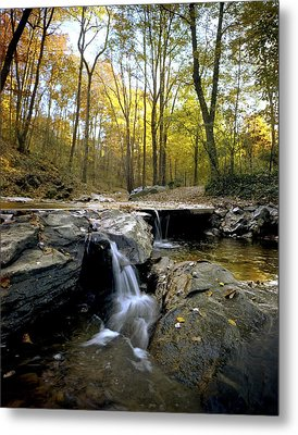 A Woodland View At Long Branch Nature Metal Print by Rex A. Stucky