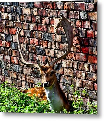 Against The Wall Metal Print by Isabella Abbie Shores