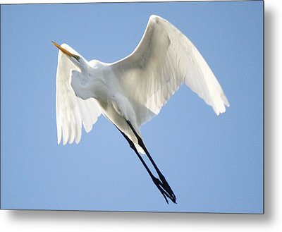 Angel Wings Metal Print by Paulette Thomas