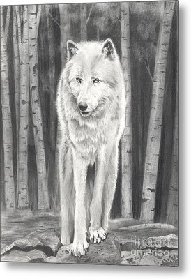 Arctic Wolf Metal Print by Christian Conner