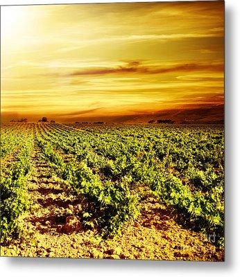 Bright Sunset At Vineyard Metal Print by Anna Om