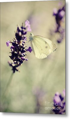 Butterfly.. Metal Print by LHJB Photography