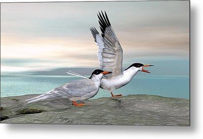 Common Tern Metal Print by Walter Colvin