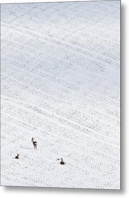 Deer In A Distant Snow Covered Field Metal Print by Adrian Bicker