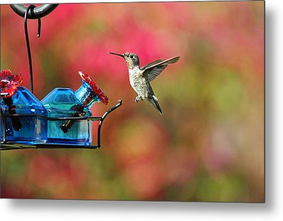Dropping In Metal Print by Lynn Bauer