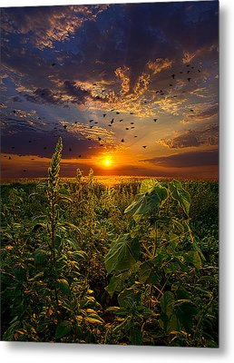 Early Bird Special Metal Print by Phil Koch