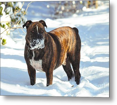 Face Full Of Snow Metal Print by Tommy  Urbans