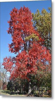 Fall Colors Metal Print by Denise Ellis