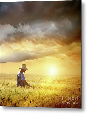 Farmer Checking His Crop Of Wheat  Metal Print by Sandra Cunningham