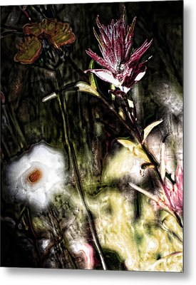Field Of Feelings  Metal Print by JC Photography and Art