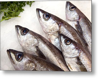 Fishes Metal Print by Jane Rix