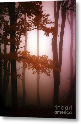 Foggy Misty Trees Metal Print by Mike Nellums