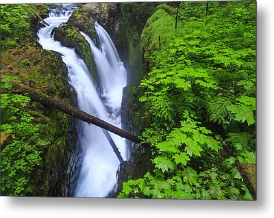 Forest And Stream In The Olympic Forest Metal Print by Gavriel Jecan