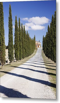 Gravel Road Lined With Cypress Trees Metal Print by Jeremy Woodhouse