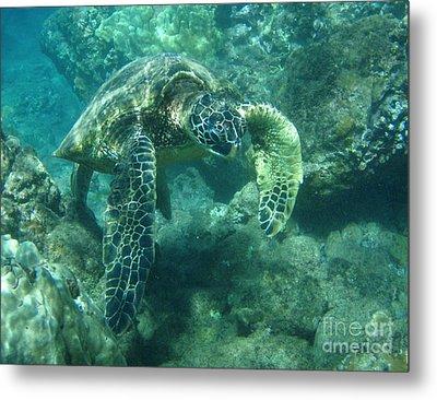Green Sea Turtle Hawaii Metal Print by Bob Christopher