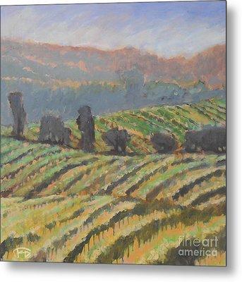 Hillside Vineyard Metal Print by Kip Decker