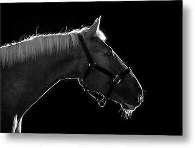 Horse Metal Print by Arman Zhenikeyev - professional photographer from Kazakhstan
