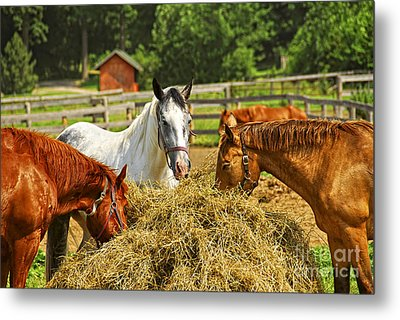 Horses At The Ranch Metal Print by Elena Elisseeva