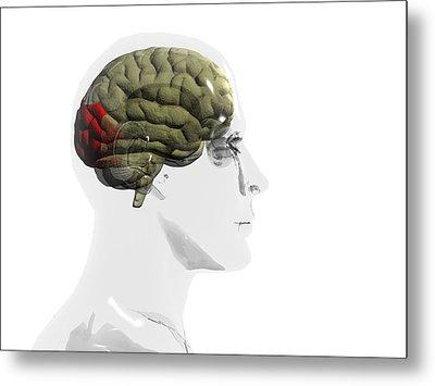Human Brain, Occipital Lobe Metal Print by Christian Darkin