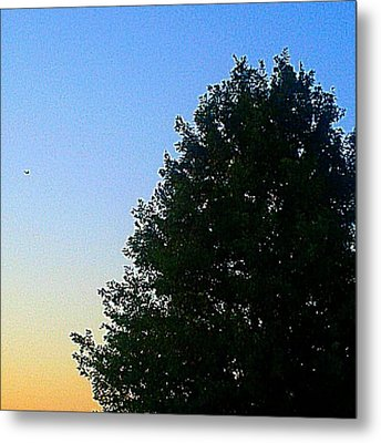 #instadroid #andrography #nexuss #tree Metal Print by Kel Hill