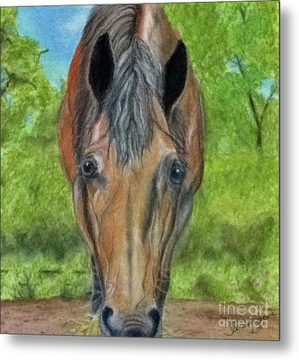Lilly Metal Print by Teresa Vecere